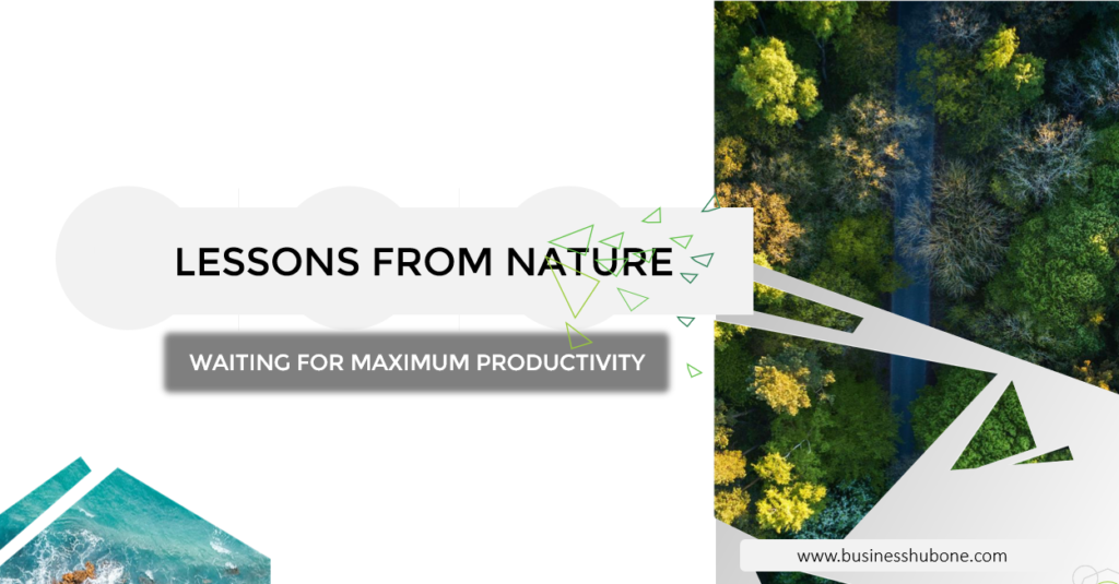 Business lessons from nature: waiting for maximum prductivity